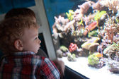 Child watching fishes — Stock Photo