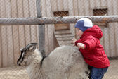 Child on a goat — Stock Photo