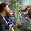 Stock Photo: Family looking at monkey