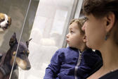 Family looking at dogs — Stock Photo