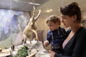 Mother with son at zoological museum — Stock Photo