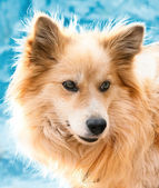 Portrait of a beautiful dog in winter — Stock Photo
