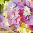 Beautiful hydrangea — Stock Photo #13192820