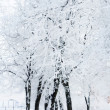 Winter park in snow — 图库照片