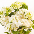 Beautiful hydrangea — Stock Photo #13597618
