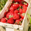 Stock Photo: Strawberries in a basket