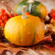 Stock Photo: Harvested pumpkins with fall leaves