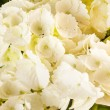 Beautiful hydrangea — Stock Photo #13769477