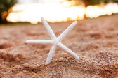 Beautiful starfish on sand — Stock Photo