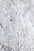 Winter park in snow — Stockfoto