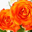 Orange roses — Stock Photo #14678033