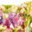 Beautiful hydrangea — Stock Photo #14680739