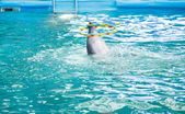 Dolphin in the dolphinarium pool — Stock Photo