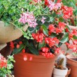 Geranium pots — Stock Photo #15700557