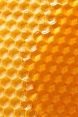 свежий мед гребень — Стоковое фото