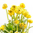 Yellow Ranunculus — Stock Photo #16954013