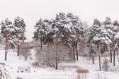 прекрасный зимний — Стоковое фото