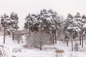 Fina vinter — Stockfoto