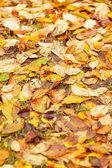осенние листья на земле для фона — Стоковое фото