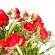 Red Ranunculus — Stock Photo #18196909