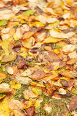 Autumn leaves on ground for background — Stock Photo