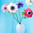 Stock Photo: Anemone flowers