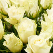 White roses — Stock Photo #18782731