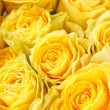 Beautiful roses — Stock Photo #18948459