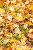 Las hojas de otoño en suelo para el fondo — Foto de Stock