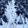 Snow covered branches in winter forest — Stock Photo