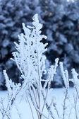 Coperta di neve rami nella foresta invernale — Foto Stock
