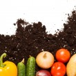 Stock Photo: Vegetables on soil