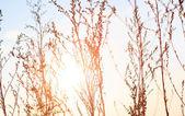 Summer plants at sunset light — Stock Photo