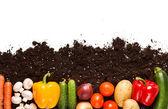 蔬菜对土壤 — 图库照片