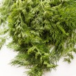 Fresh dill — Stock Photo #21803495