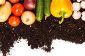 Vegetables on the soil — Stock Photo