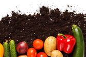 Vegetables on the soil — Stock Photo