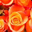 Nice roses - Foto Stock