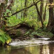 Forest river — Stock Photo #22547879