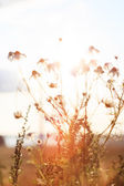 Summer plants at sunset light — Stock Photo