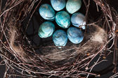 Blue eggs in the nest — Stock Photo