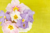 Frühlingsblumen — Stockfoto