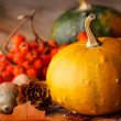 Harvested pumpkins with fall leaves — Stock Photo #24216859