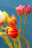 Lindas tulipas — Foto Stock