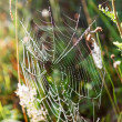 Summer and Cobwebs - Stock Photo