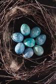 Blå ägg i boet — Stockfoto