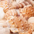 Sea shells background - Zdjcie stockowe