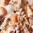 Sea shells background - 