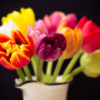 Nice tulip — Stock Photo