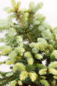 Fir-tree isolated on white — Stock Photo